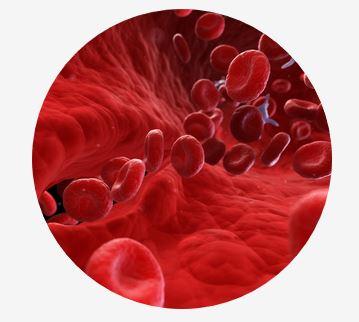 53. Jahrestagung der Deutschen Gesellschaft für Transfusionsmedizin und Immunhämatologie e.V. (DGTI)